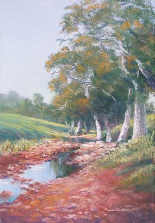 rn-stream-gum-trees-large